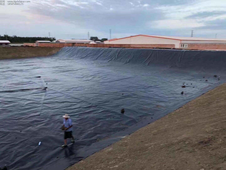 大庆林甸牧场氧化塘采用1.5mm土工膜进行防渗